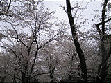 IMG_1467.jpg